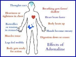 Effects of adrenaline